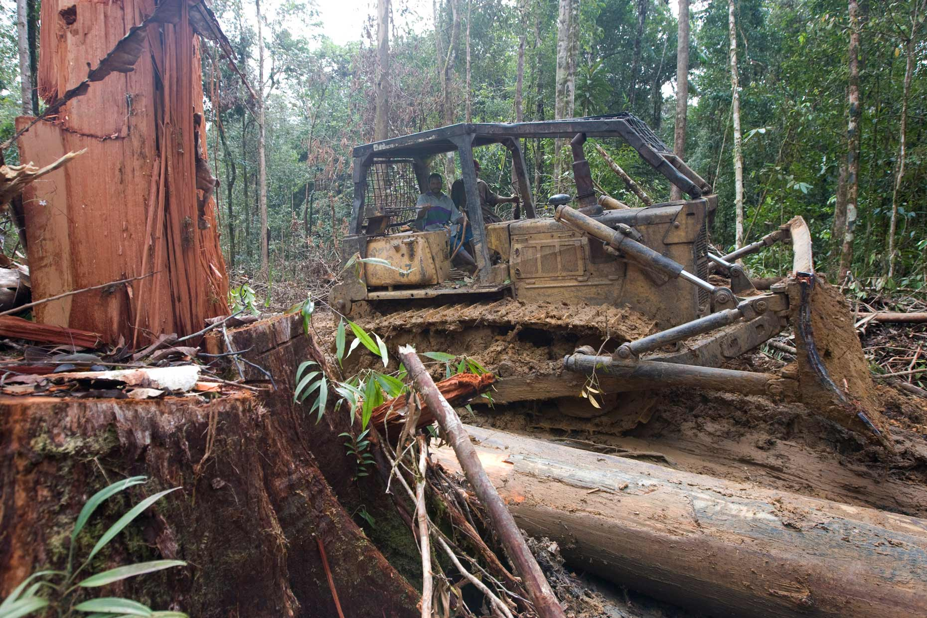 20080906_illegal-logging_6229.jpg