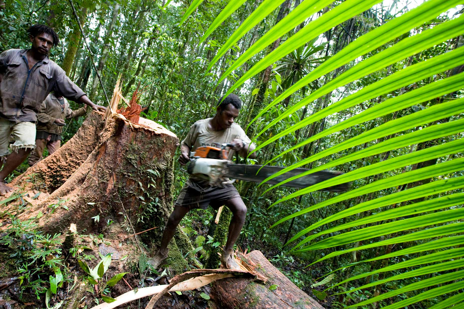 illegal logging in PNG, by Scotland Greenpeace photographer