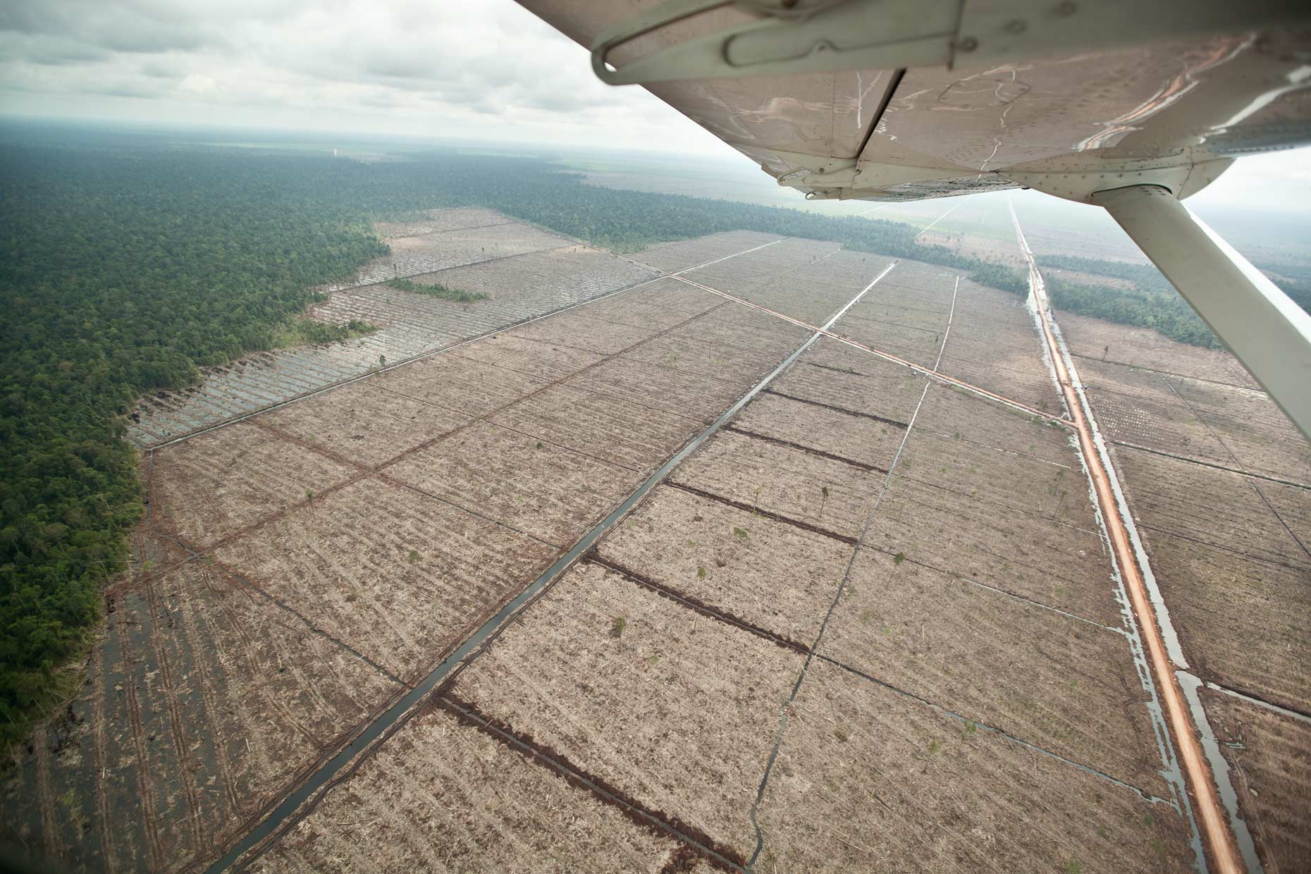 Virgin rainforest and clear cut logging, Indonesia, by Scotland Greenpeace photographer