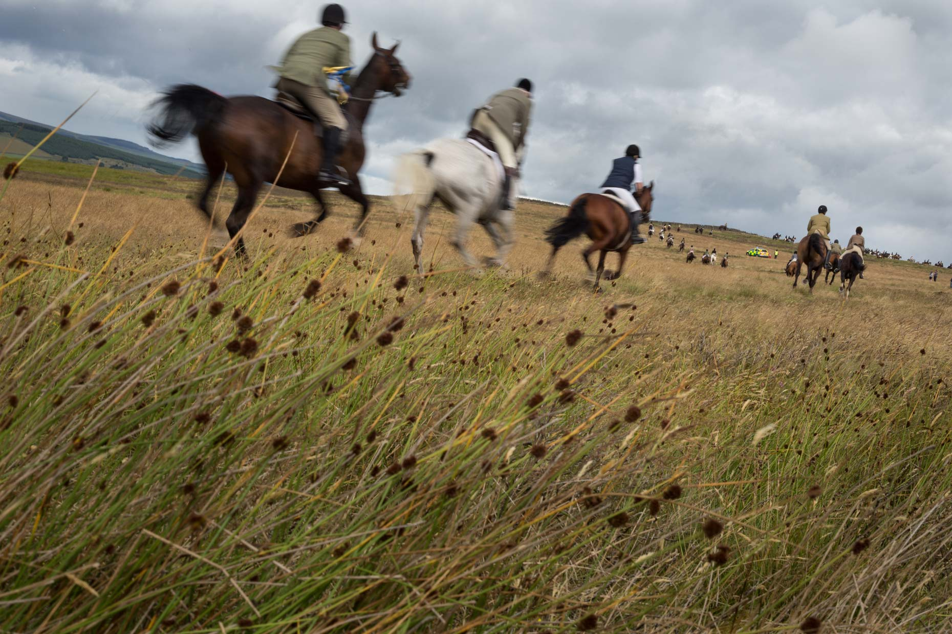 Horses at Lauder Common Riding, Scotland photographer