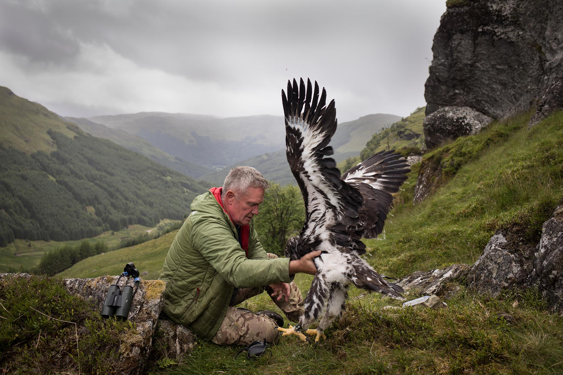 Tagging a Golden Eagle chick in Scotland.